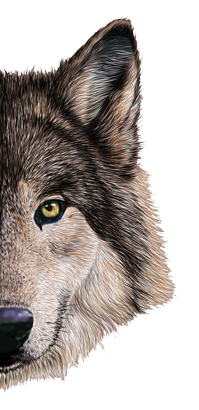 seitz_wolfskopf_halb