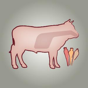 seitz-barf-symbole-01