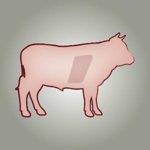 seitz-barf-symbole-11