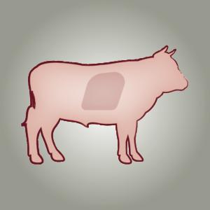 seitz-barf-symbole-13