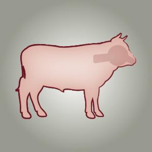 seitz-barf-symbole-15