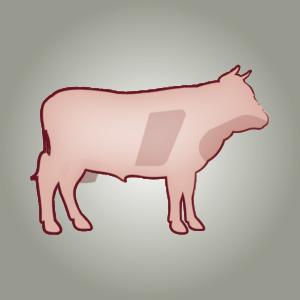 seitz-barf-symbole-20